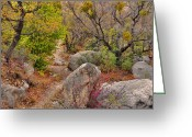 "\""guadalupe National Park\\\"" Greeting Cards - High Desert Spring Greeting Card by Stephen  Vecchiotti"