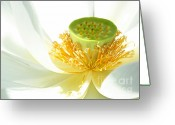 Lotus Seed Pod Greeting Cards - High Key Lotus Greeting Card by Sabrina L Ryan