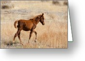 Wild Horses Greeting Cards - High Stepping Greeting Card by Mike  Dawson