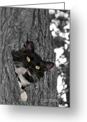 Sweet Spot Greeting Cards - High Up in a Tree Greeting Card by Sari ONeal