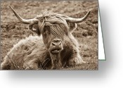 Face Greeting Cards - Highland Cow  Greeting Card by Justin Albrecht