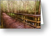 Bridge Greeting Cards Greeting Cards - Highlands Hammock Greeting Card by Debra and Dave Vanderlaan