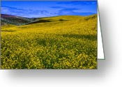 Rape Greeting Cards - Hills of Canola Greeting Card by David Patterson