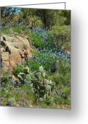 Texas Hill Country Greeting Cards - Hillside Blue Greeting Card by Robert Anschutz