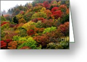 Winding Road Greeting Cards - Hillside Canvas Fall Color Greeting Card by Thomas R Fletcher