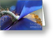 Blue Florals Greeting Cards - Himalayan Blue Poppy Flower Macro World Greeting Card by Jennie Marie Schell