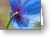 Blue Florals Greeting Cards - Himalayan Blue Poppy Flower Shadows Greeting Card by Jennie Marie Schell