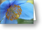 Blue Florals Greeting Cards - Himalayan Blue Poppy Macro Greeting Card by Jennie Marie Schell