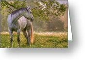 Equine Greeting Cards - Hindsight Greeting Card by Ron  McGinnis