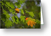 Mixed Media Photo Greeting Cards - Hint of Autumn Greeting Card by Bonnie Bruno