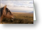 Ron Mcginnis Photography Greeting Cards - His Domain Greeting Card by Ron  McGinnis