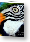 Colorful Birds Photo Greeting Cards - His Watchful Eye Greeting Card by Karen Wiles
