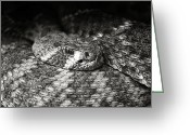 Snake Scales Greeting Cards - Hissy Fit Greeting Card by Ricky Barnard