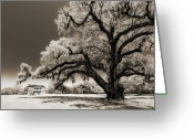 Historic Lighthouse Greeting Cards - Historic Drayton Hall in Charleston South Carolina Live Oak Tree Greeting Card by Dustin K Ryan