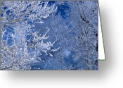 Idaho Greeting Cards - Hoarfrost Greeting Card by Leland Howard