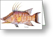 Barracuda Greeting Cards - Hog Fish Greeting Card by Carey Chen