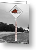 Selective Color Greeting Cards - Hog Sign Greeting Card by Scott Pellegrin