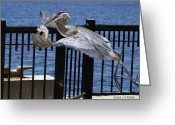 Birdseye Greeting Cards - Hold On Greeting Card by Karen Devonne Douglas