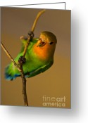 Rating Greeting Cards - Holding Tight Greeting Card by Syed Aqueel