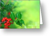 Pointed Greeting Cards - Holly Branch Greeting Card by Carlos Caetano