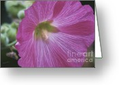 Hollyhock Greeting Cards - Hollyhock In Pink Greeting Card by Deborah Benoit