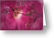 Hollyhock Greeting Cards - Hollyhock in Pink Greeting Card by Richard Cummings