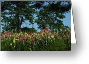 Indiana Flowers Greeting Cards - HollyHocks and Trees Greeting Card by Michael L Kimble