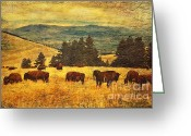 Buffalo Greeting Cards - Home on the Range Greeting Card by Lianne Schneider