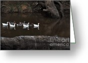 Reflections In Water Greeting Cards - Homeward Bound Greeting Card by Kaye Menner