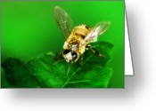 Hornet Greeting Cards - Honey Bee Greeting Card by Bill Cannon