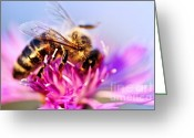 Feeding Greeting Cards - Honey bee  Greeting Card by Elena Elisseeva