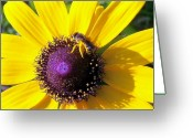 Kay Sawyer Greeting Cards - Honey Daisy Greeting Card by Kay Sawyer
