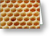 Hexagons Greeting Cards - Honey In Wax Honeycomb Cells Greeting Card by Cordelia Molloy