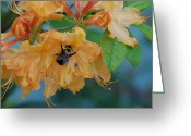 Insect Greeting Cards - Honeydue Greeting Card by Aimee L Maher