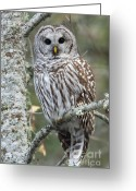 Barred Owl Greeting Cards - Hoot Hoot Hoot are You Greeting Card by Reflective Moments  Photography and Digital Art Images