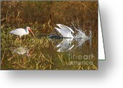 Great Egrets Greeting Cards - Hope You Got That Greeting Card by Carol Groenen