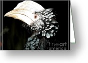 Hornbill Greeting Cards - Hornbill Bird Greeting Card by Rose Santuci-Sofranko
