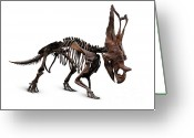 Dinosaur Greeting Cards - Horned Dinosaur Skeleton Greeting Card by Oleksiy Maksymenko