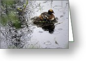 Mound Greeting Cards - Horned Grebe On Boreal Pond With Baby Greeting Card by Michael S. Quinton