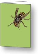 Hornet Greeting Cards - Hornet Greeting Card by Jude Labuszewski