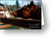 Buddies Greeting Cards - Horse and Cat Nuzzle Greeting Card by Thomas R Fletcher