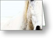 White White Horse Digital Art Greeting Cards - Horse Art - Waiting For You  Greeting Card by Sharon Cummings