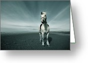 Livestock Greeting Cards - Horse At Irvine Beach Greeting Card by Mikeimages