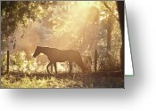 Running Horse Greeting Cards - Horse Backlit At Sunset Greeting Card by Seth Christie