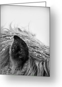 Mane Greeting Cards - Horse, Close-up Of Ear And Mane Greeting Card by Vilhjalmur Ingi Vilhjalmsson