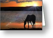 John Kolenberg Greeting Cards - Horse Drinking Water  Greeting Card by John  Kolenberg