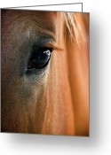 Horse Greeting Cards - Horse Eye Greeting Card by Adam Romanowicz