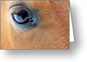 Lashes Greeting Cards - Horse Eye Greeting Card by Odd Jeppesen