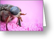 Compound Greeting Cards - Horse Fly Greeting Card by Ryan Kelly