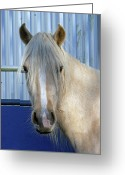 Gaited  Horse Greeting Cards - Horse For Sale  Greeting Card by Pamela Patch